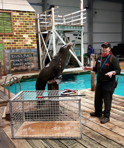 Sea Lion Performance Training at Knowsley Safari