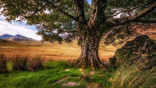 The Whispering tree....