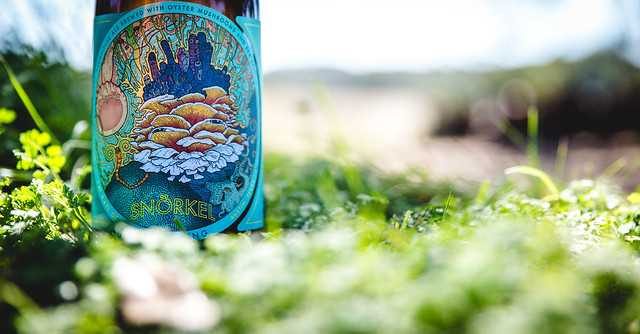 Jester King-9852