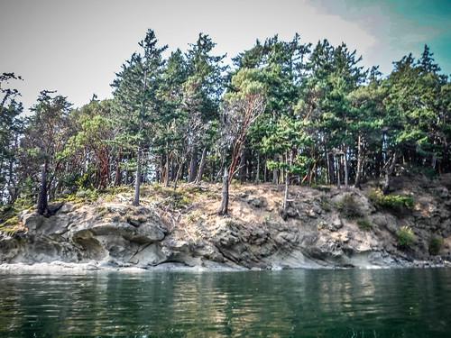 Kayaking Bellingham Bay-83