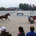 Kasaške dirke v Komendi 24.09.2017 Osma dirka