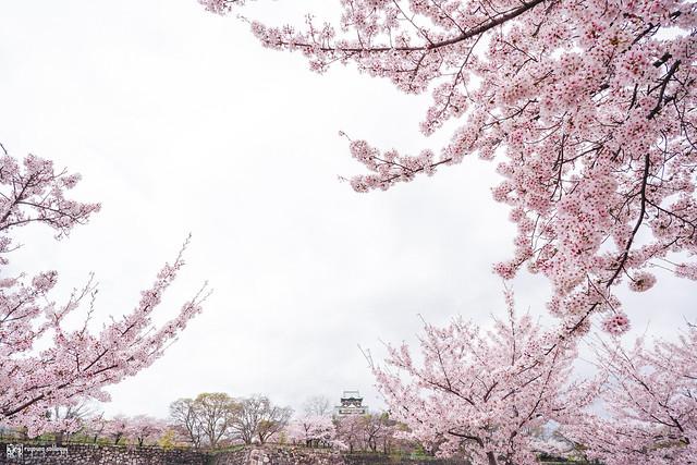 十年,京都四季 | 卷五 | 京都與我,有時還有關西 | 46