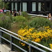 Flowers & Promenade (High Line/NYC)