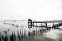 Sungei Boloh Wetlands, Singapore