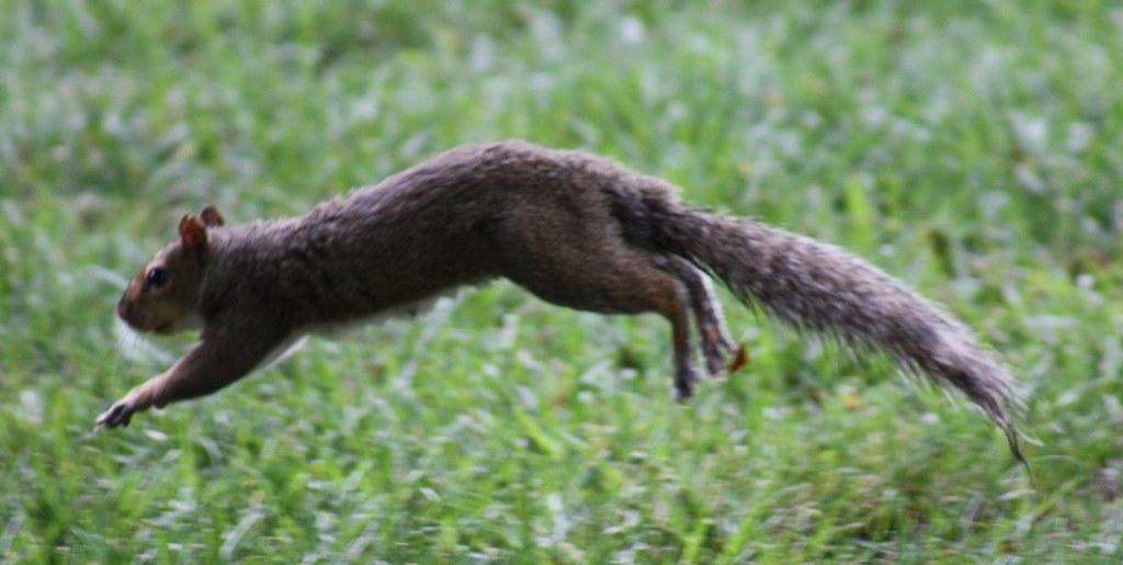 Squirrel Invasion 3