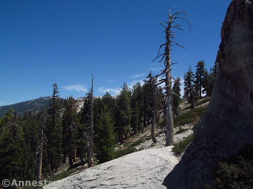 Views to the north, toward the actual summit of Indian Rock, in Yosemite National Park, California