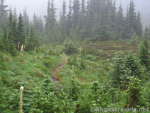 One more glimpse of misty meadows... Timberline Trail in the Mount Hood National Forest, Oregon