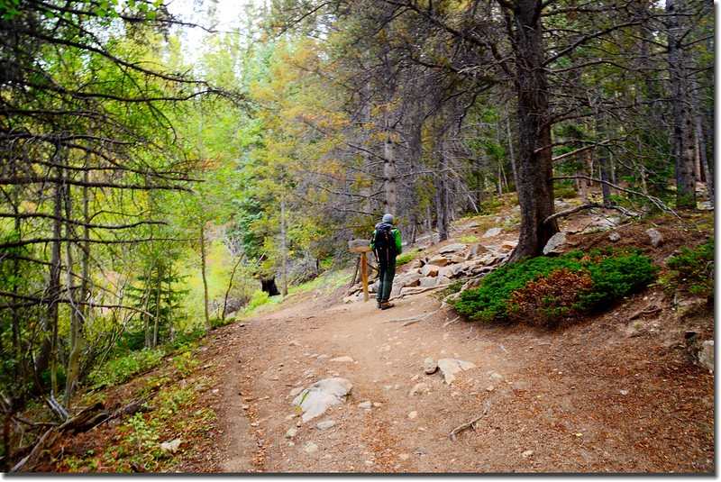 Hartenstein Lake and Mount Yale trail fork