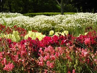 昭和の森 1 花々 02