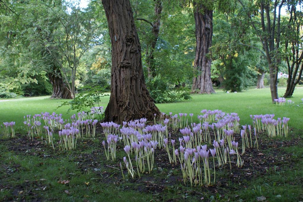 Dans le jardin botanique de Frederiksberg (Copenhague).