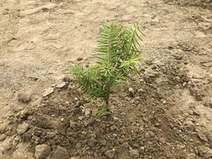復興の森づくり植樹祭 2017