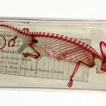 Preserved Skeleton of a Chameleon