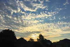 Early morning in the neighborhood