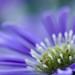 Purple sweetness by Trayc99