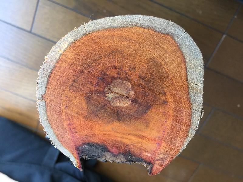 Caesalpinia sappan (Sappanwood)