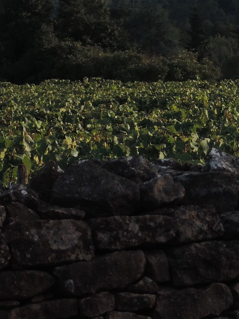 Mignones Terres bouguignones, Nikon COOLPIX P520