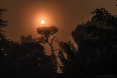 Levée de soleil dans la brume_4047