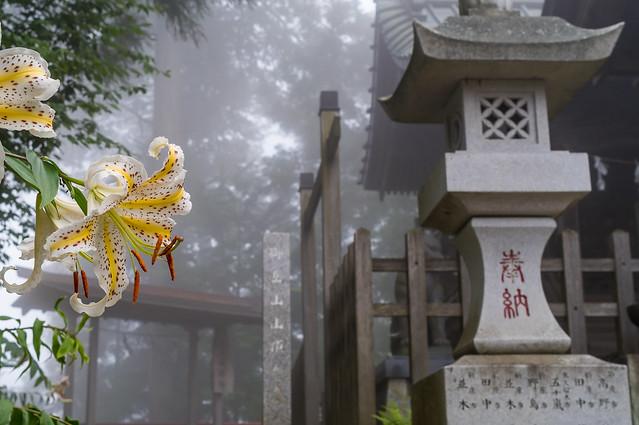 御岳山頂に咲くヤマユリ
