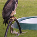 International Birds of Prey Centre (4)