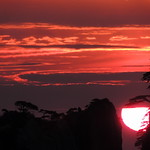 Thu, 09/17/2015 - 18:13 - [Huangshan, Anhui, China]  The glorious sun rising up the steep slope of a mountain, meeting a pine tree silhouette which completes its circumference, under a dramatic burning sky in the natural park of Huangshan, Yellow mountain.   Follow my photos in Facebook   ©2017 Germán Vogel - All rights reserved - No usage allowed in any form without the written consent of the photographer.