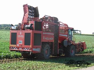 Holmer Terrados T3-027