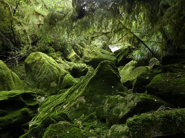 Mossy Limestone Wonderland