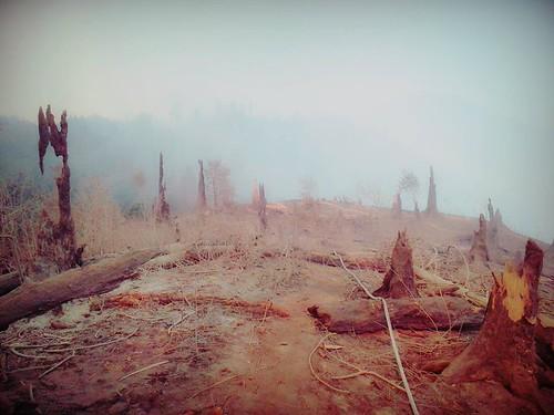 ბორჯომი ხარაგაულის ტყე პარკი