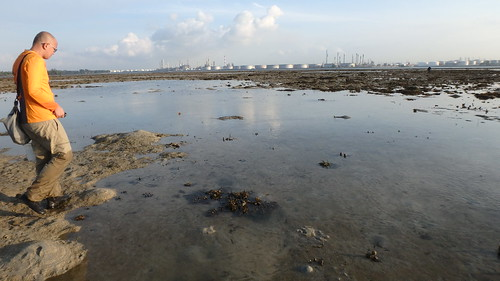 Still no seagrasses at Terumbu Semakau