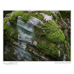 Erratic and Moss, Bruce Trail, Ontario