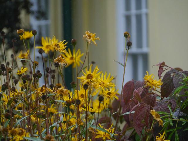 The National Botanic Garden of Wales 0087