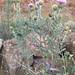 Yerbas, rosa, piedras... por gabriel-argenis