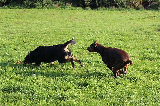 Hundeferien in Kaichen