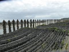 St-Cast plage des 4 Vaux (4)