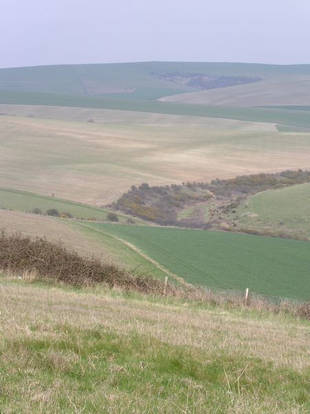 The heart of the Downs
