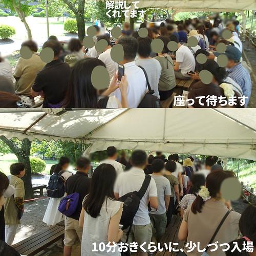 松本城の入場制限も楽々