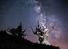 Milky Way and Great Basin Bristlecone Pines by optimalfocusphotography