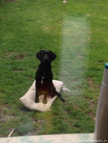 lostdoglurganparkgalway lost dog lurgan park galway september 2017