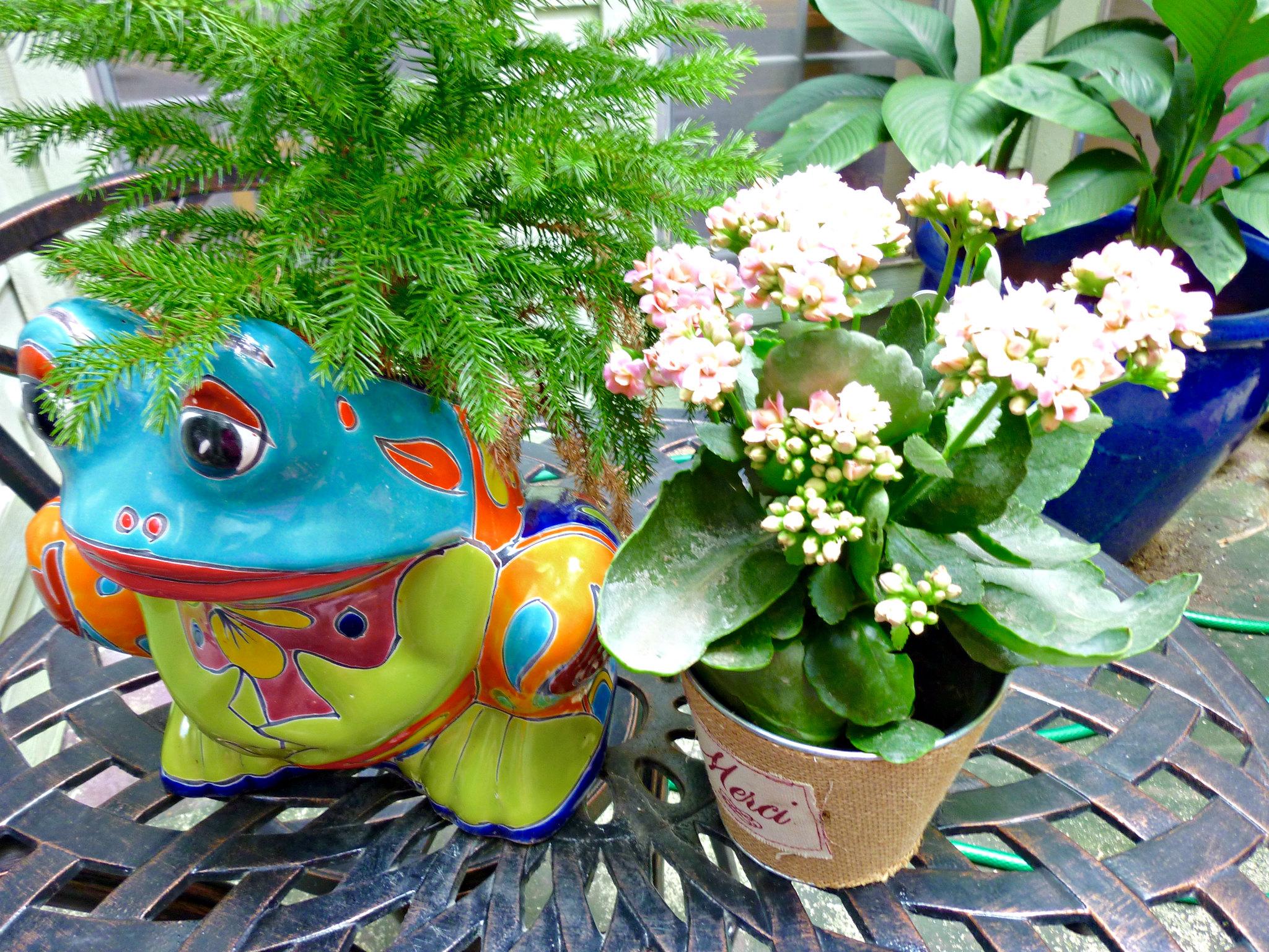 atruim flowers