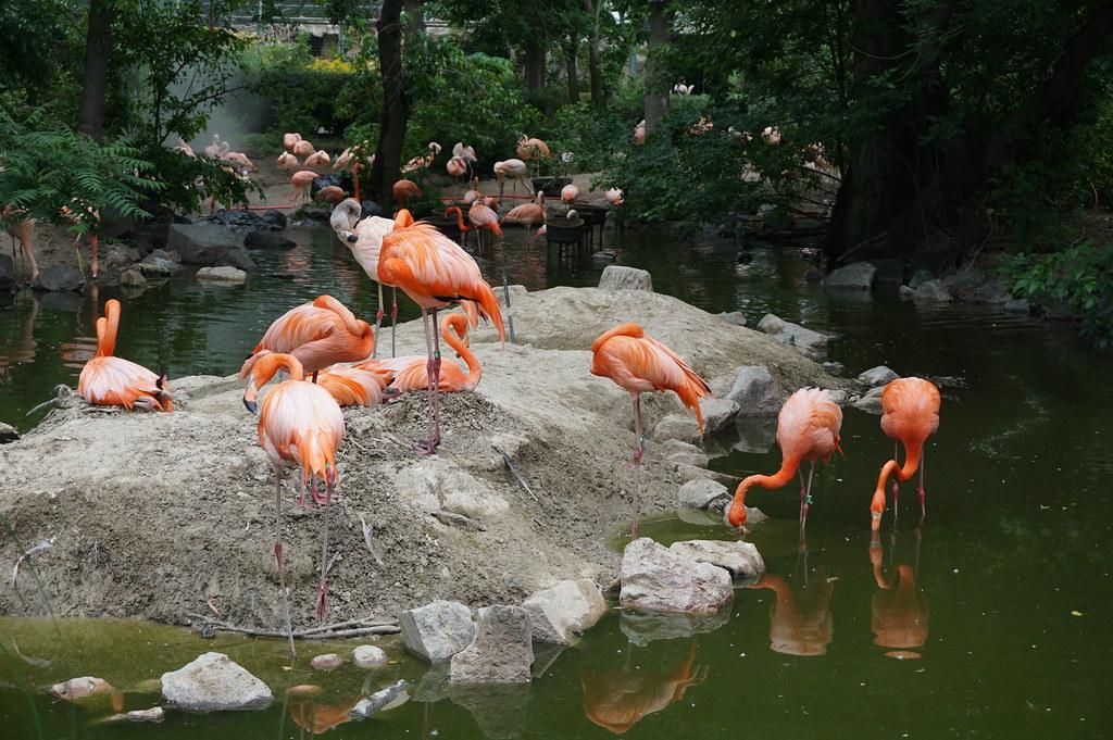Denver_Zoo_20170617_0181