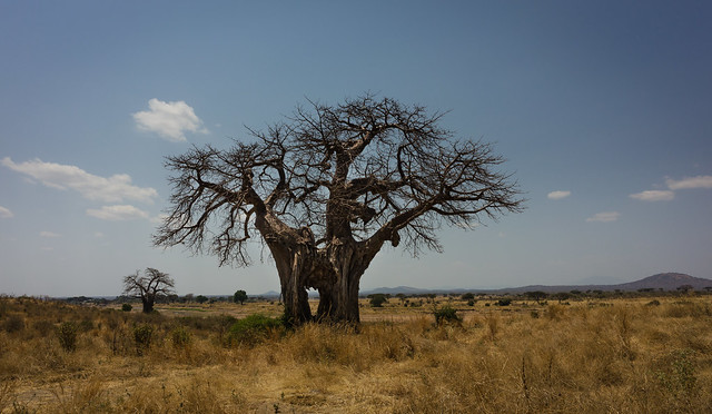 The Baobab Hole, Nikon COOLPIX A
