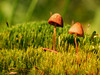 Micro Shrooms by wrighteye