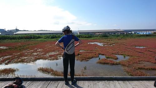 うーんみが深かったサンゴ草群生地。