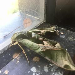 Moths butterflies and caterpillars