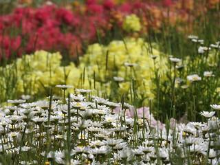 昭和の森 1 花々 07