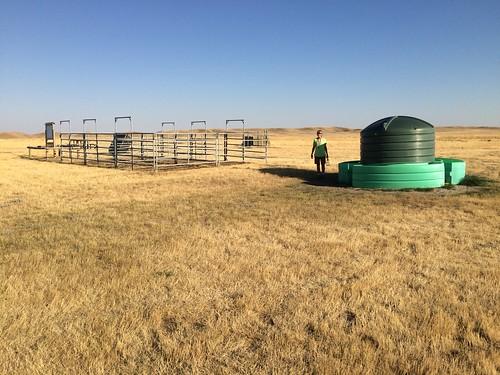 Grasslands West block horse stalls