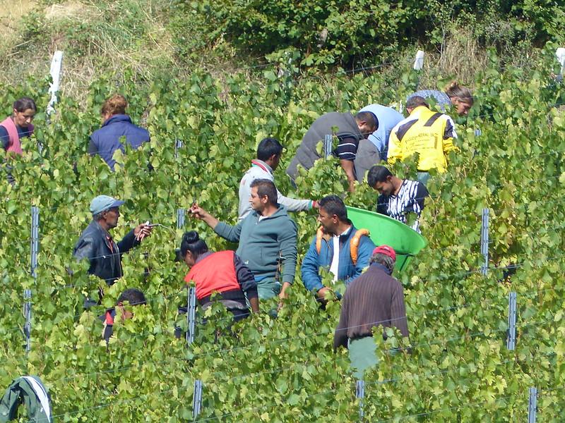 A travers le Bourbonnais, le Beaujolais et la Bourgogne... 37147913346_0d3a199d93_c