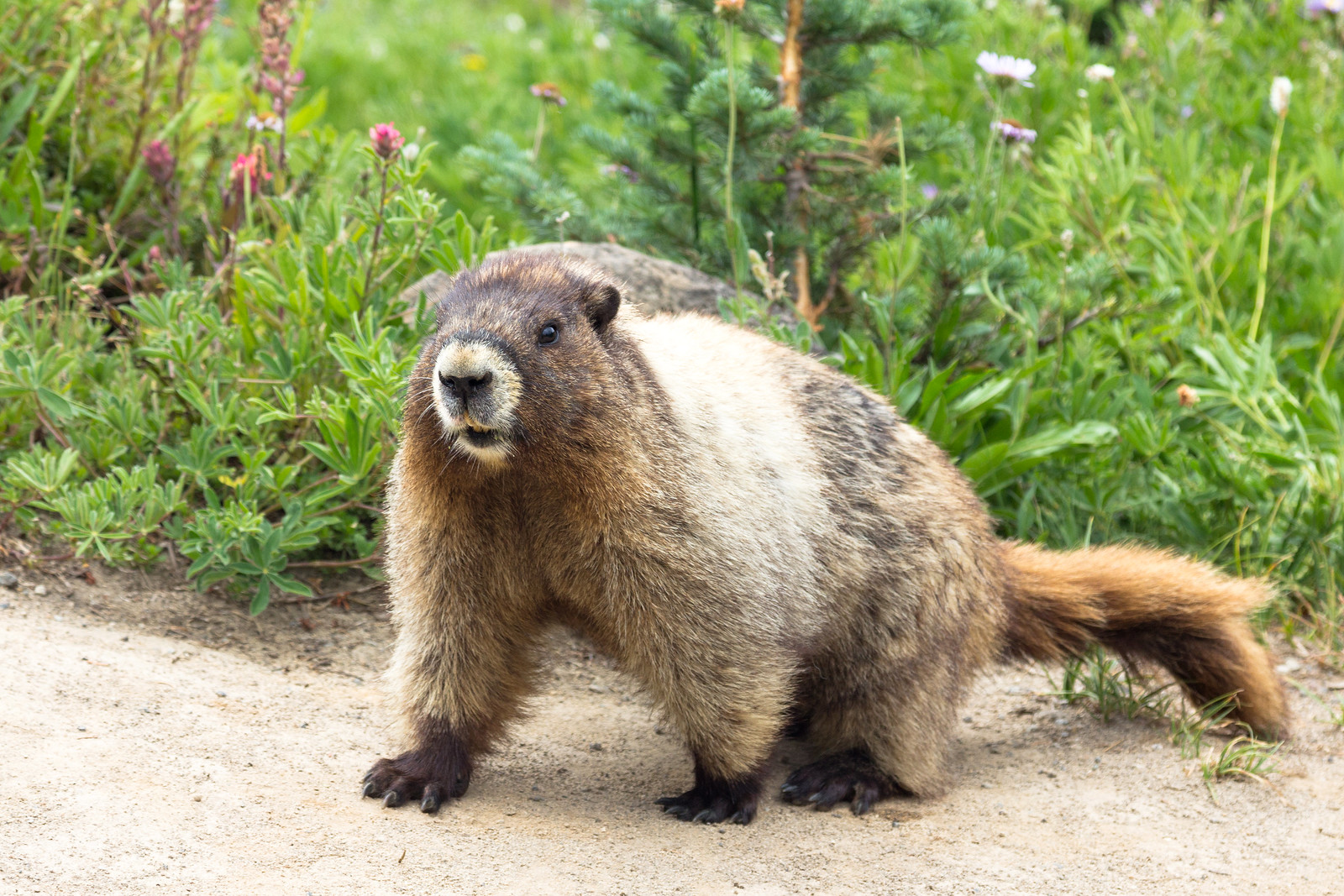 Nora's Marmot Quest '17