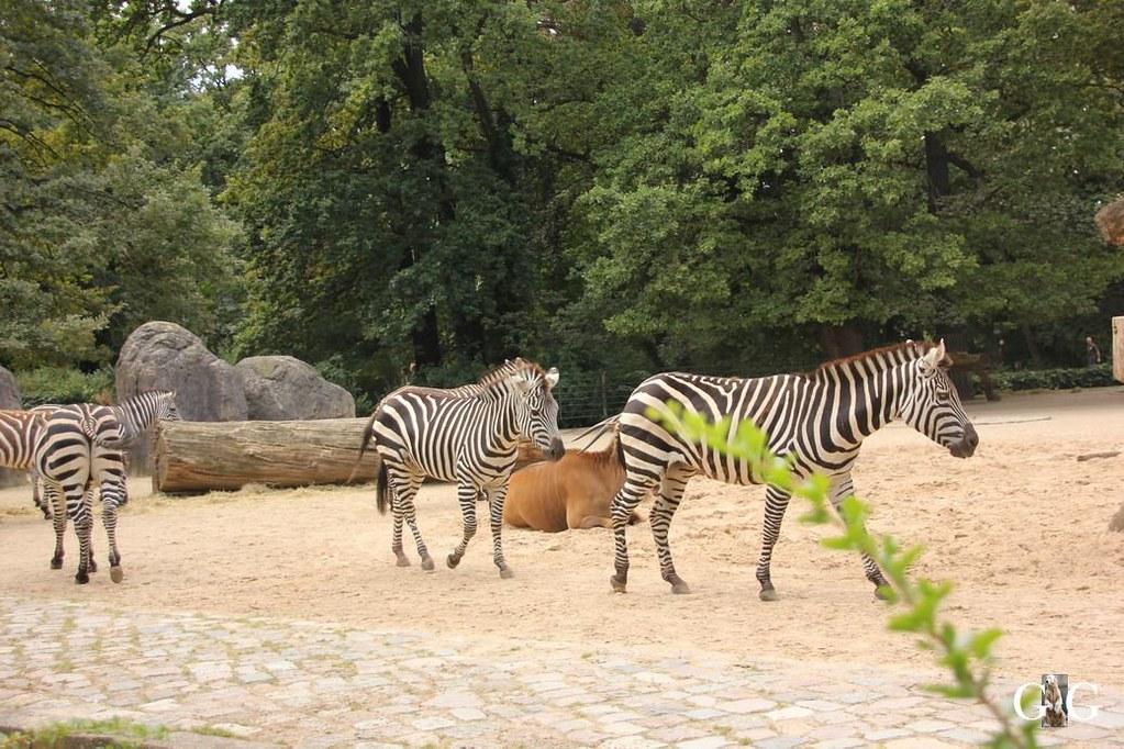 Besuch Zoo Berlin 13.08.17150