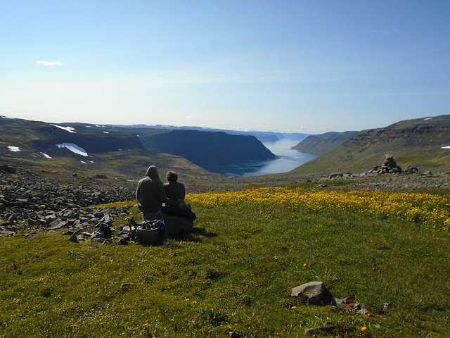 Flowers Overlooking Veiðileysufjörður in Hornstrandir