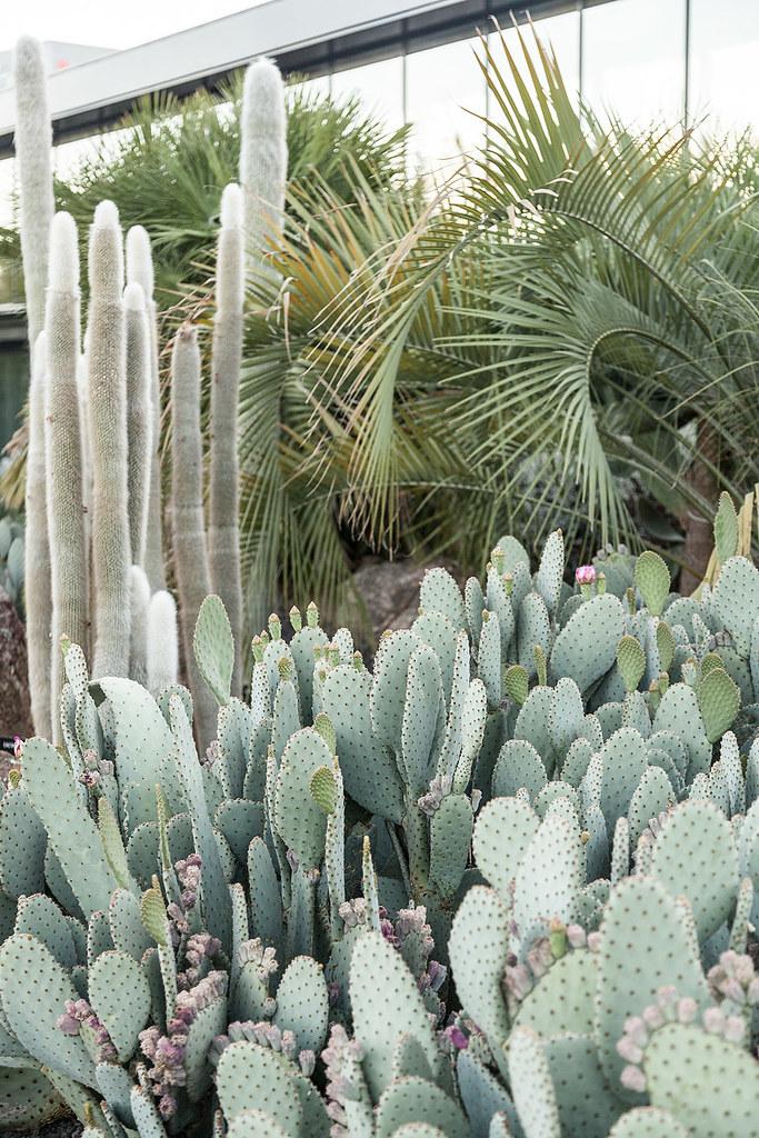 Cactus · Fábrica de Imaginación